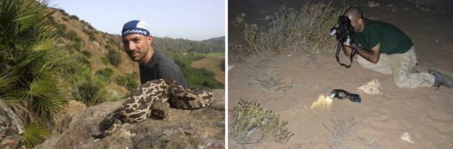 El bicheo de día y de noche es fascinante. 1) En Marruecos con una víbora del Magreb. Fotografía: Octavio Robles Jiménez. 2) En Sáhara fotografiando una culebra bastarda de noche. Fotografía: Baudilio Rebollo