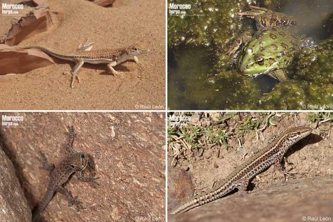 Fotografías de reptiles y anfibios