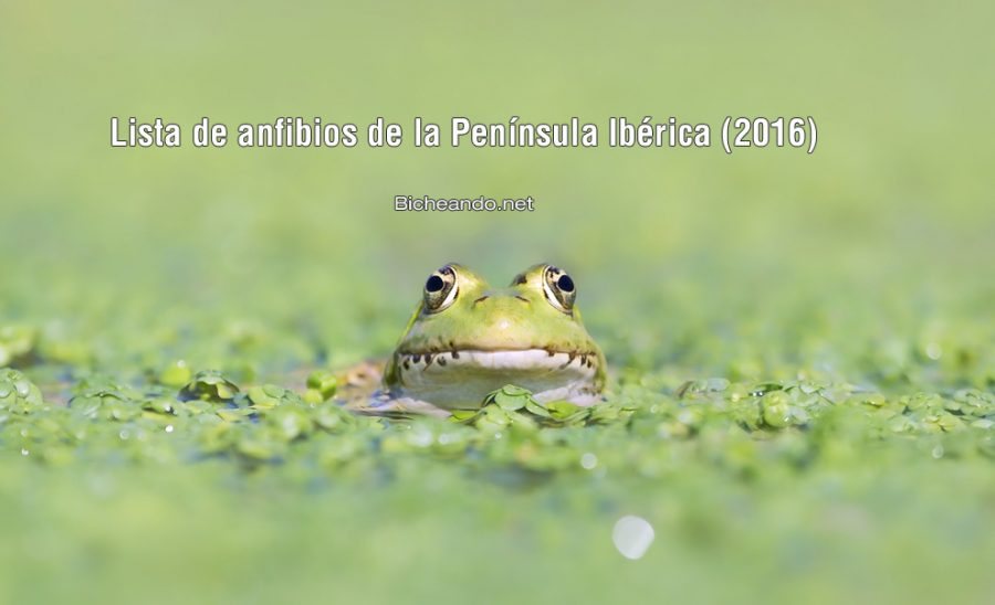 lista-de-anfibios-de-la-peninsula-iberica
