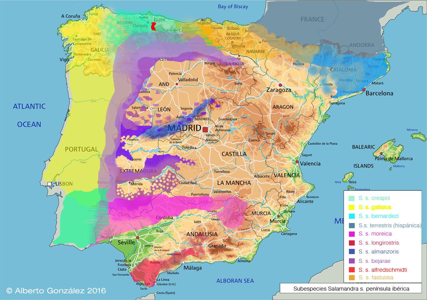 subespecies-de-salamandra-españa-peninsula-iberica