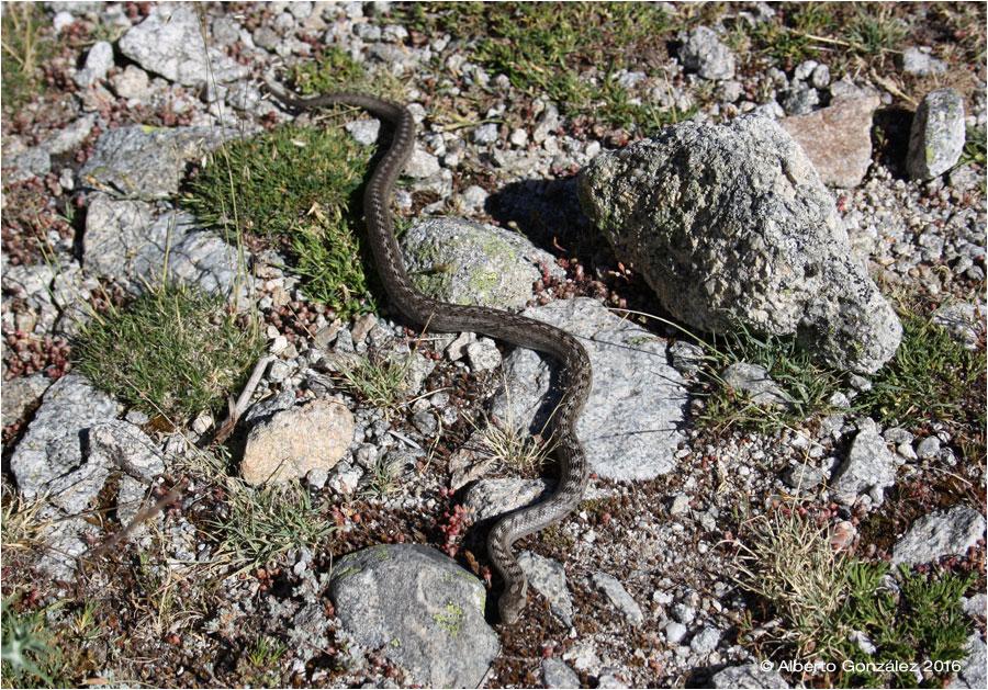 Anfibios y Reptiles del Alto Tajo