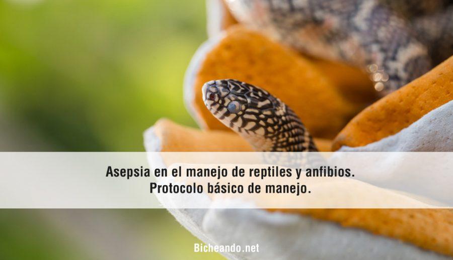 asepsia-reptiles-y-anfibios-portada-bicheando
