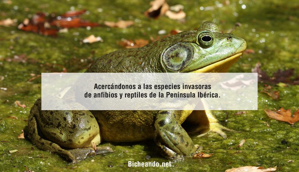 especies-invasoras-de-anfibios-y-retpiles-de-la-peninsula-iberica-portada