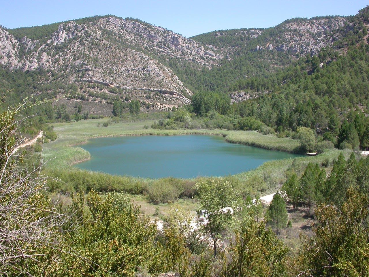 laguna de taravilla anfibios y reptiles alto tajo