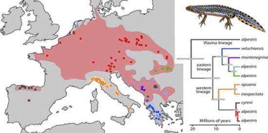 mapa-distribucion-Ichthyosaura-alpestris-Europa