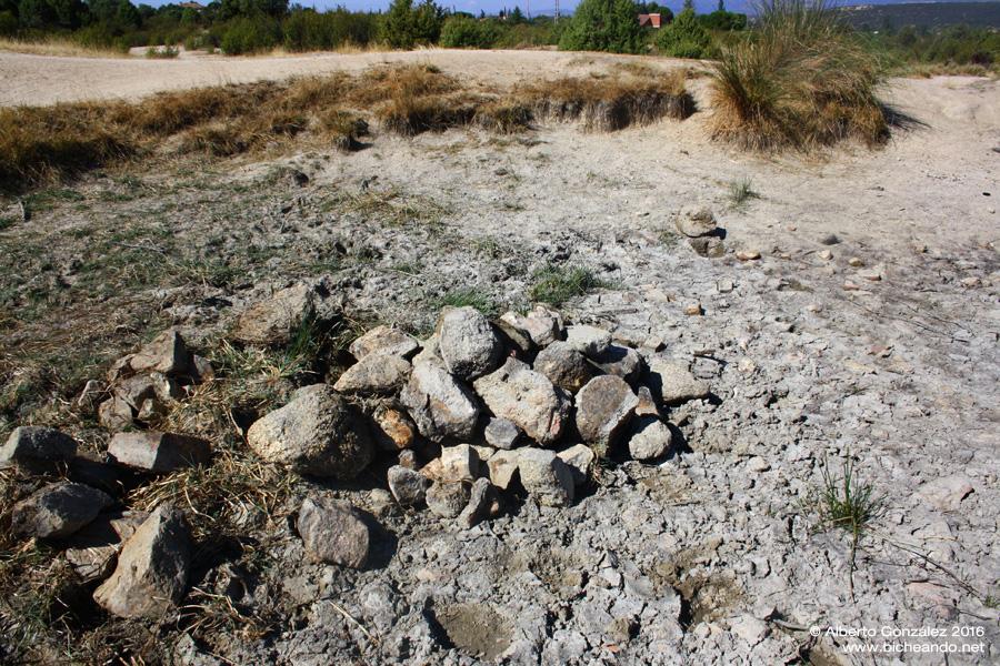 piedras-refugio-anfibios-charca-seca
