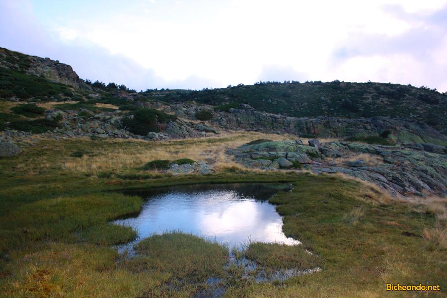 triton-alpino-madrid-peñalara-bicheando-herpetologia-03