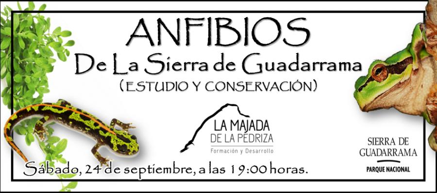 anfibios-de-la-sierra-de-guadarrama-cartel-01