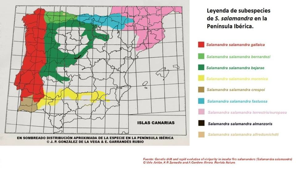 mapa salamandras españa