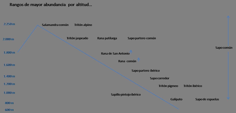 rangos-de-mayor-abundancia-de-especies-por-altitud