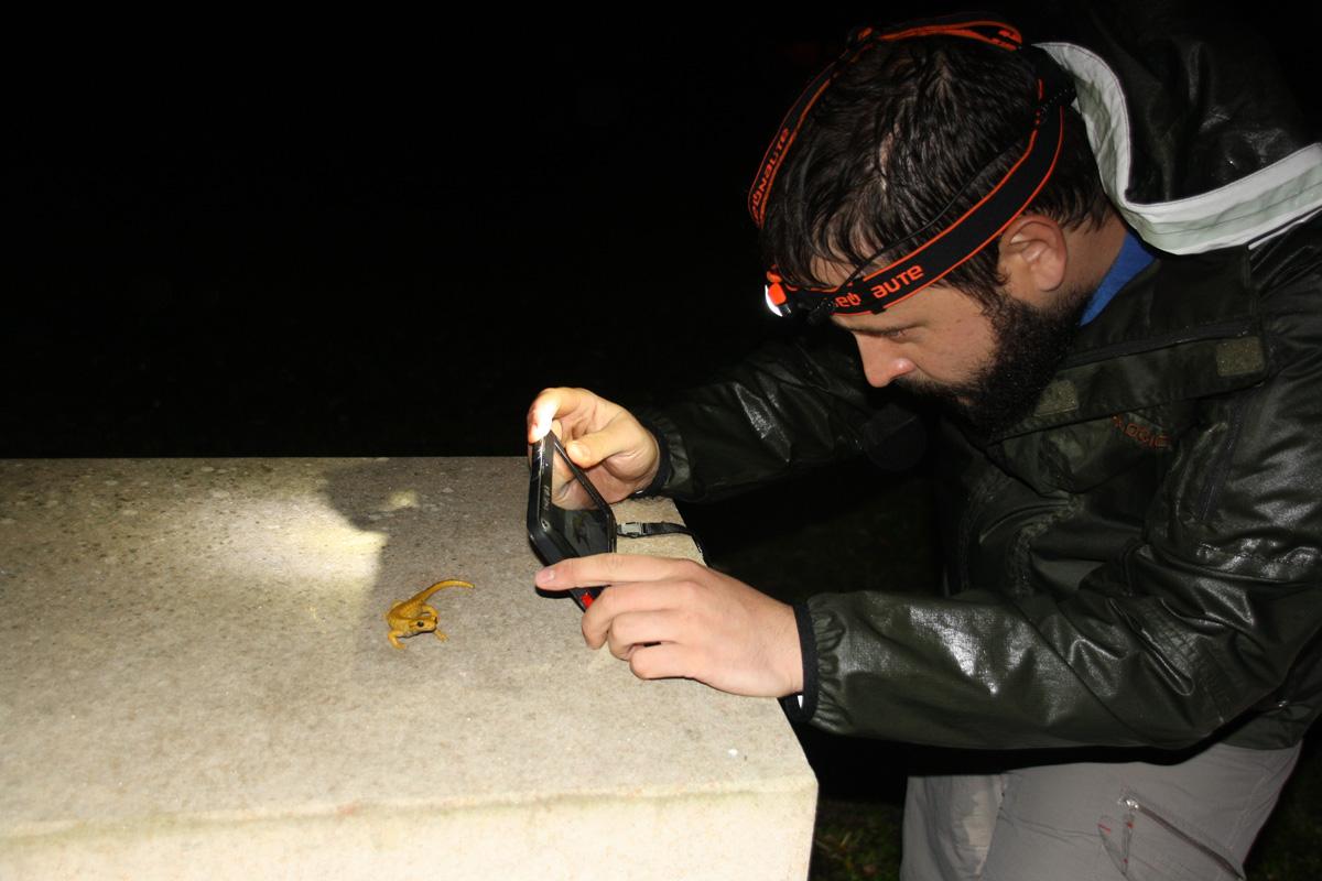 Emilio, fotografiando una variedad de salamandra amarilla en una iglesia
