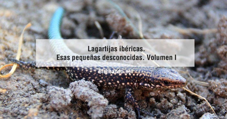 lagartijas-ibericas-lagartijas-espana-voumen-i