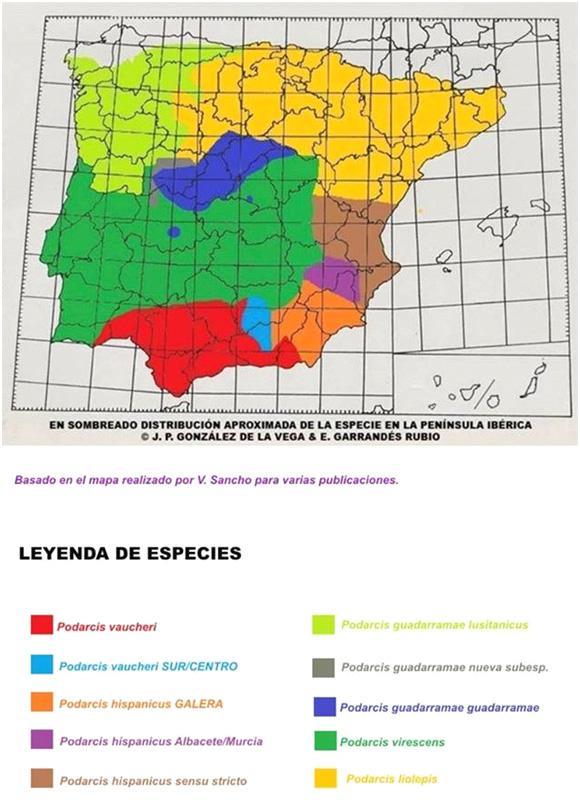 mapa-distribucion-podarcis-peninsula-iberica