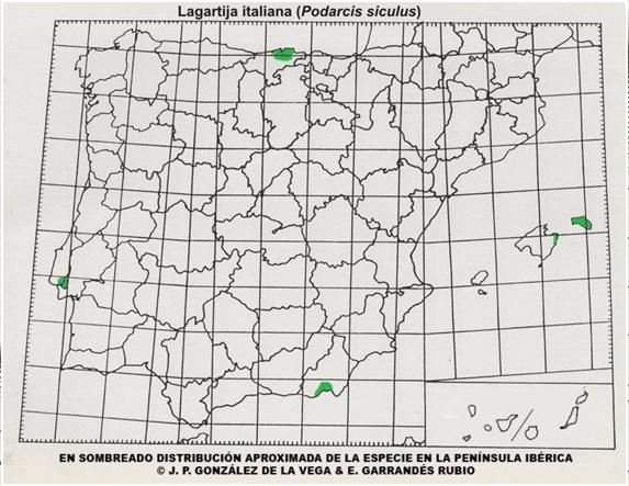 mapa-distribucion-podarcis-sicula-lagartija-italiana
