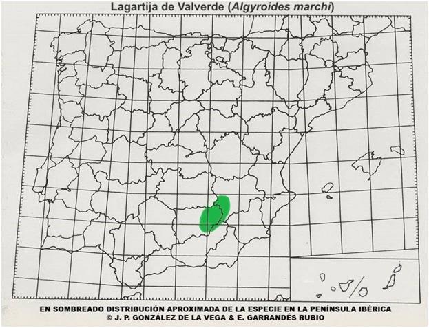 mapa-lagartijas-ibericas-lagartija-coliroja