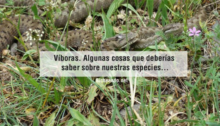 viboras-caracteristicas-venenosas