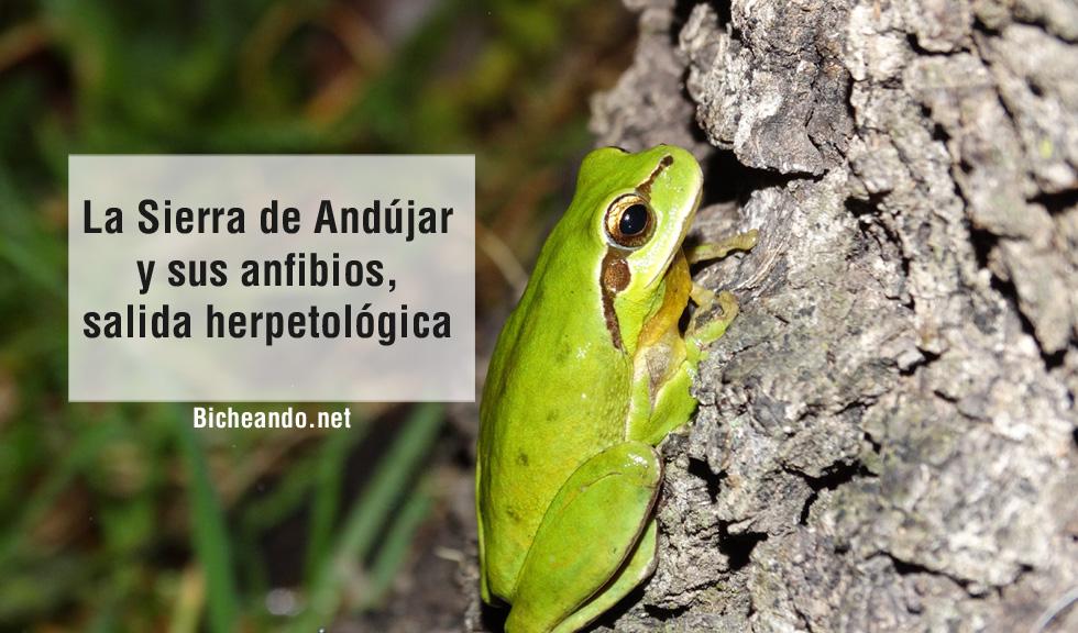 Sierra-de-Andújar-y-sus-anfibios