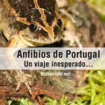 anfibios de portugal
