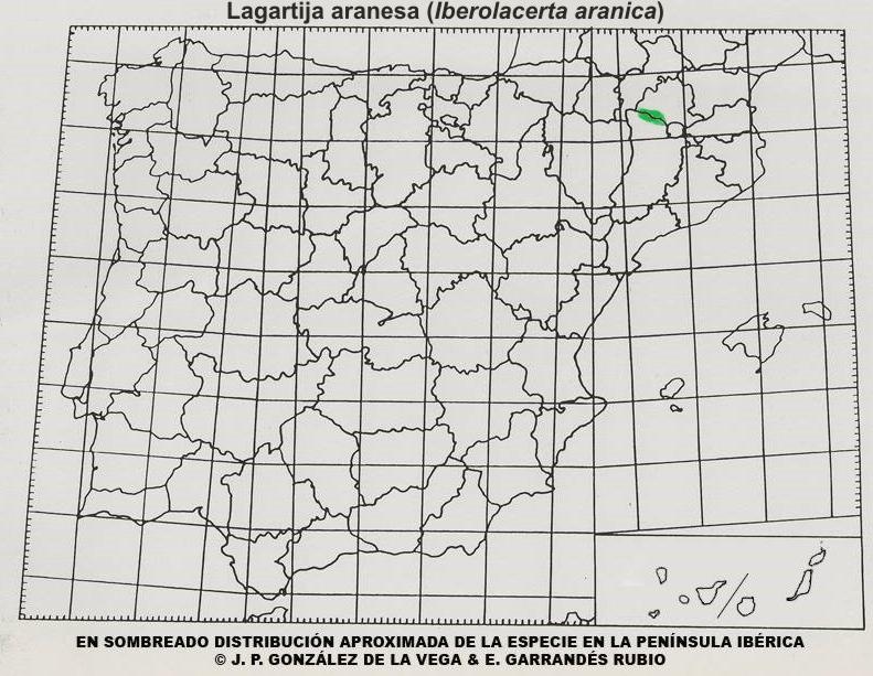 Mapa distribución de Iberolacerta aranica