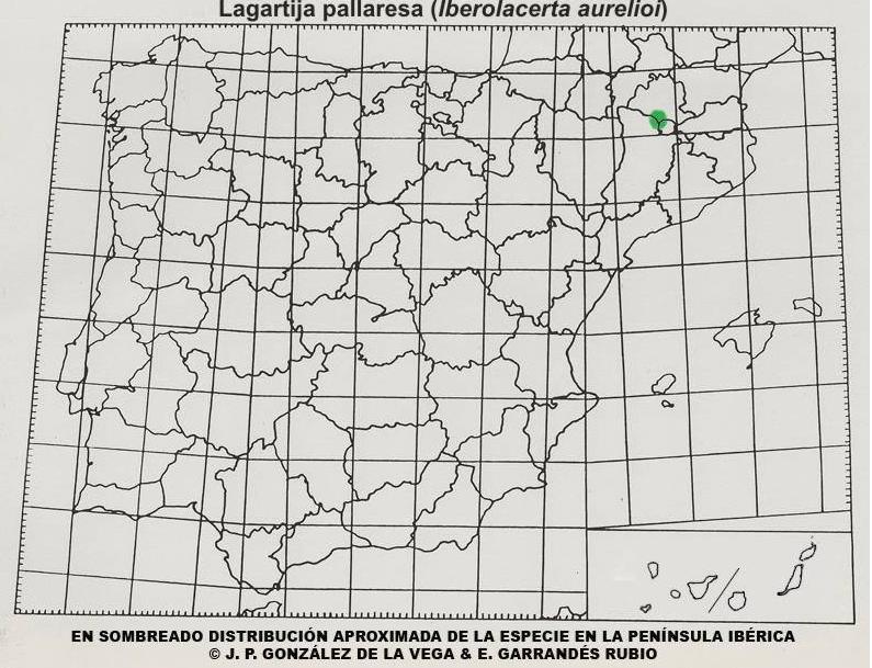 Mapa distribución Lagartija pallaresa (Iberolacerta aurelioi)