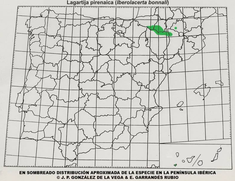 Mapa distribución Lagartija pirenaica (Iberolacerta bonnali)