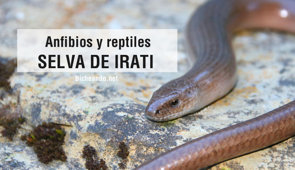 anfibios de irati reptiles de irati.