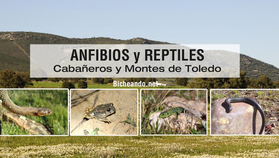 Anfibios y reptiles de Cabañeros y Montes de Toledo