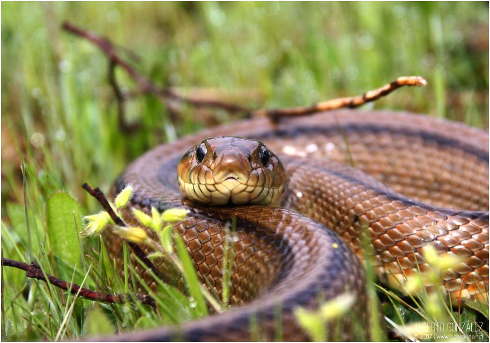 Anfibios y reptiles de Cabañeros