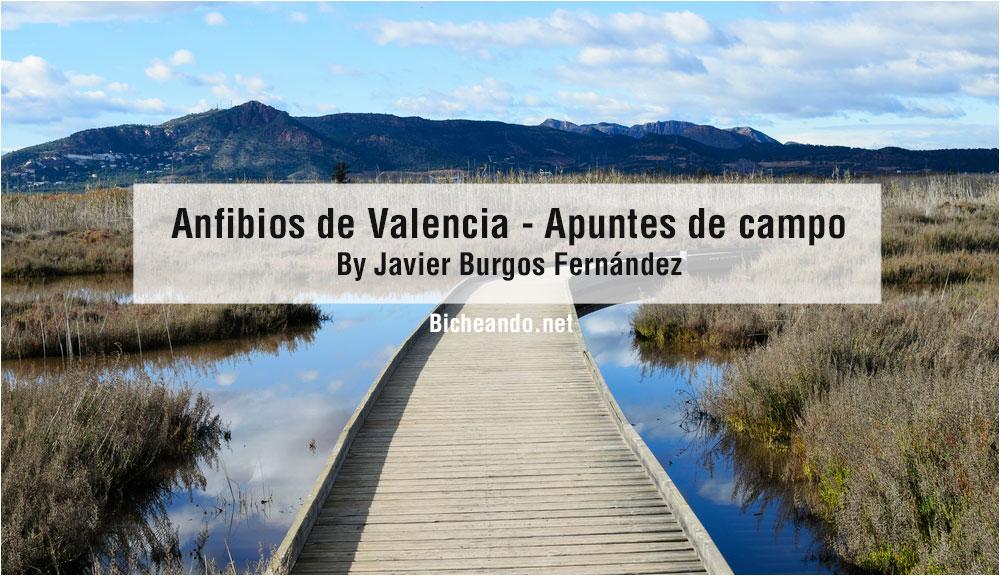 anfibios de valencia