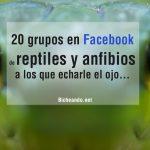 grupos-de-reptiles-y-anfibios-en-facebook