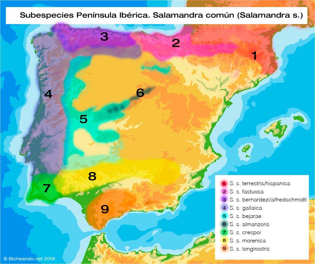 Mapa distribución subespecies salamandra península Ibérica