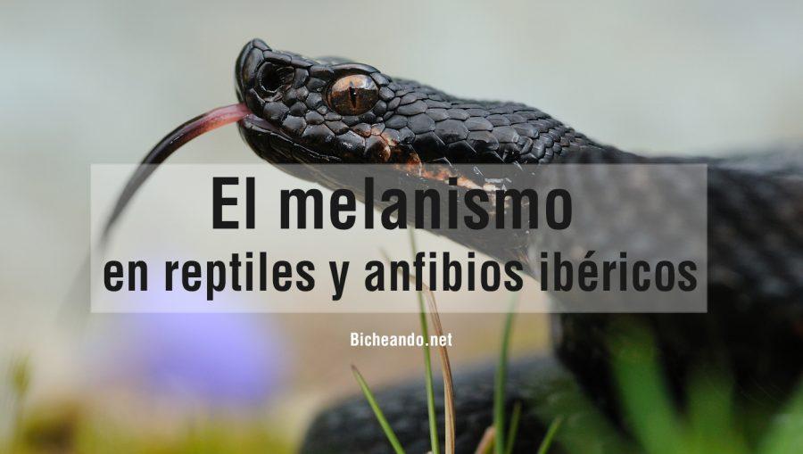 el-melanismo-en-retiles-y-anfibios-ibericos-portada