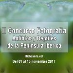 º--Concurso-de-Fotografía-de-Anfibios-y-Reptiles-de-la-Península-Ibérica