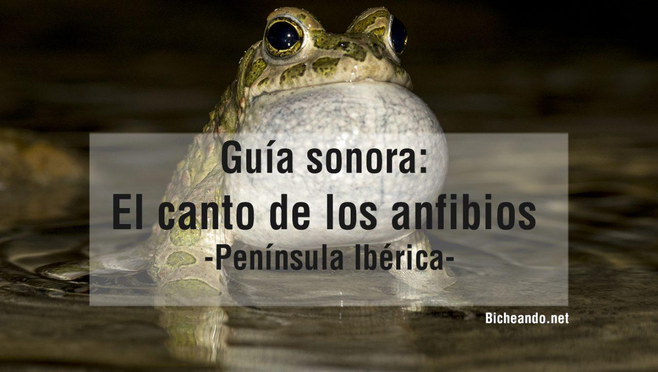 guia-sonora-anfibios-españa-peninsula-iberica-portada