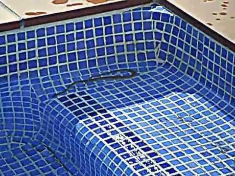 serpiente en la piscina