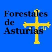 Forestales de Asturias