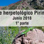 viaje-herpetologico-pirineos-parte-1