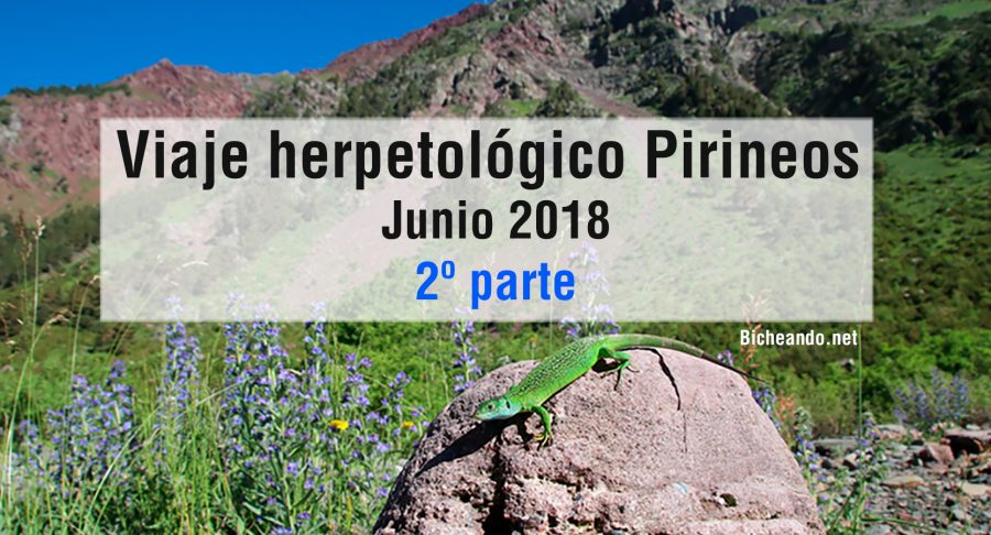 viaje-herpetologico-pirineos-parte-2