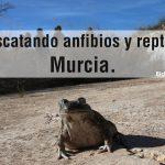 Rescatando-anfibios-y-reptilespor-Murcia