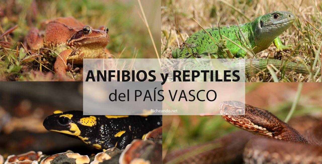 Anfibios y reptiles del país vasco