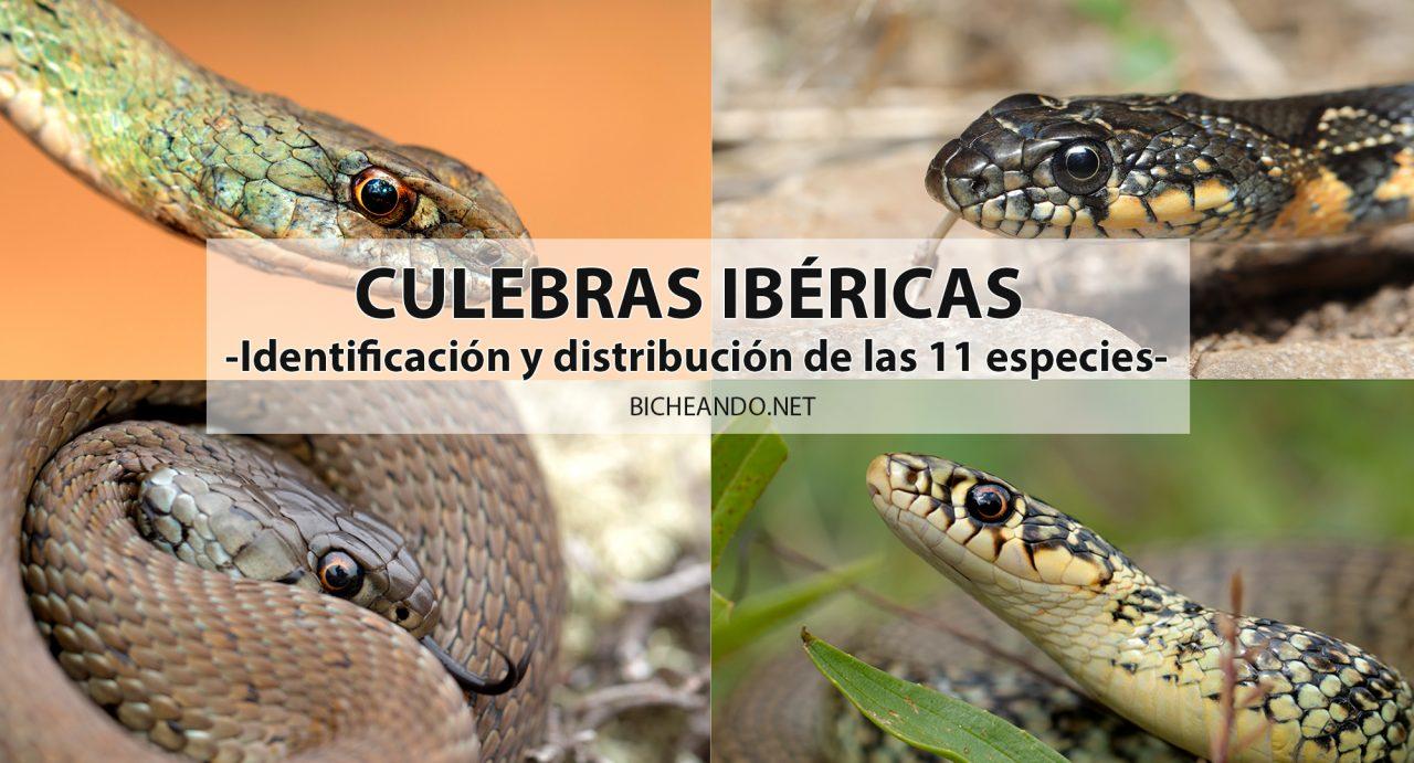 especies culebras de la península iberica
