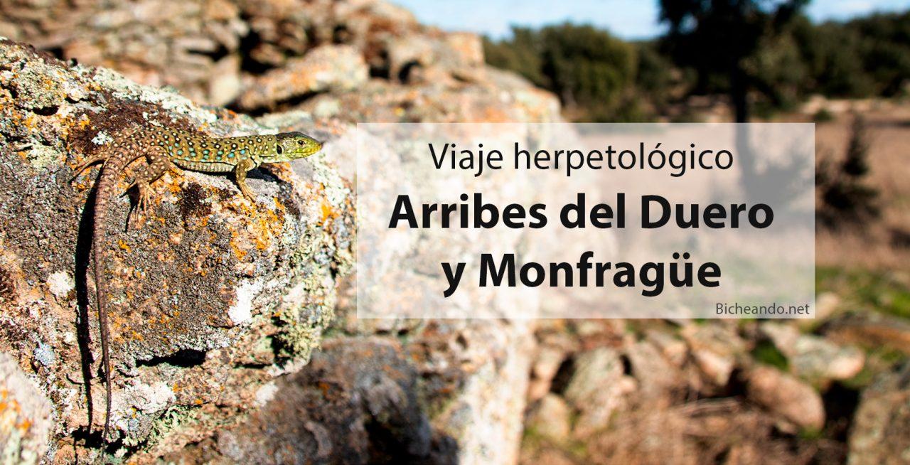 Viaje-herpetológico-por-Arribes-del-Duero-y-Monfragüe