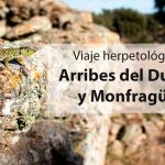 Viaje-herpetológico-por-Arribes-del-Duero-y-Monfragüe