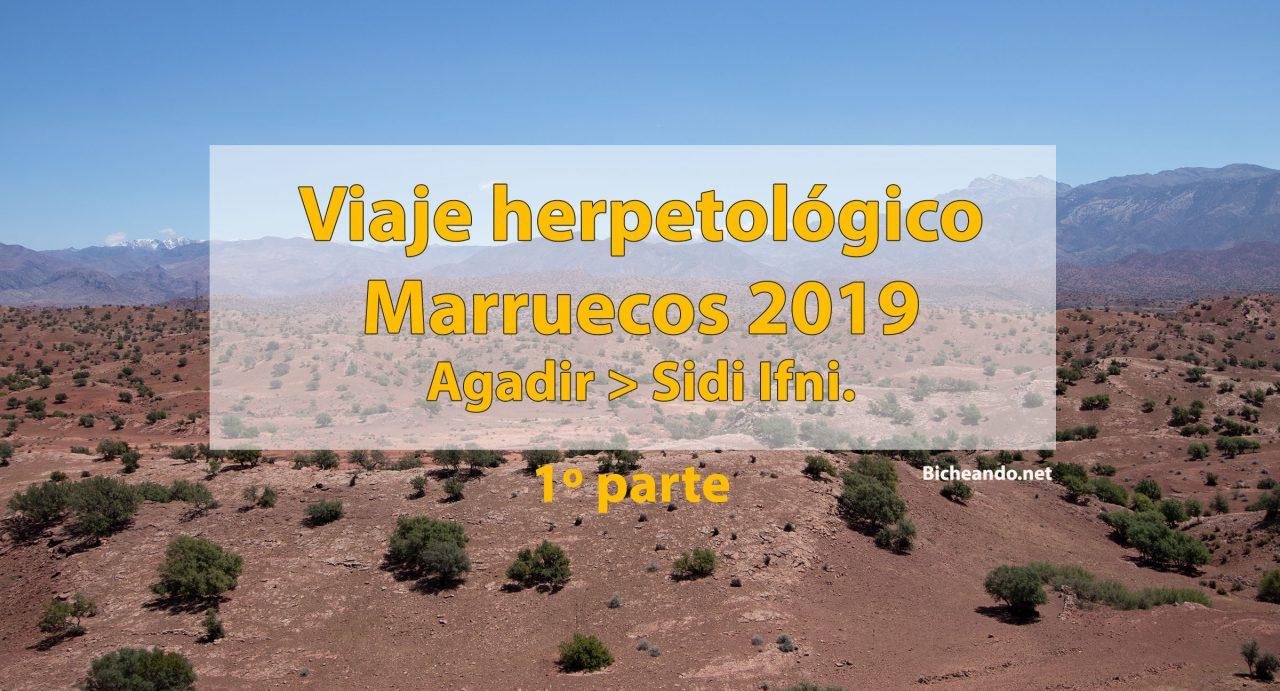 Viaje-herpetológico-Marruecos-2019-primera-parte-agadir-sidi-ifni