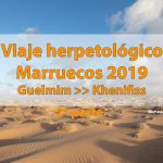 Viaje herpetológico por Marruecos 2019. Segunda parte. Guelmim-Khenifiss