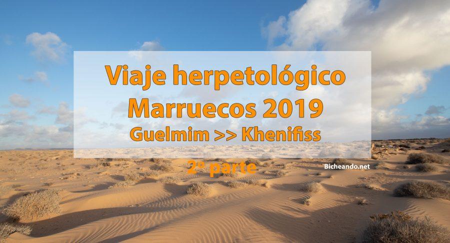 Viaje herpetológico por Marruecos 2019. Segunda parte. Guelmim-Khenifiss