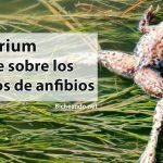 Batrachochytrium. 10 puntos clave sobre los hongos asesinos de anfibios.