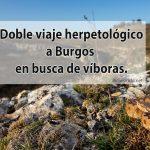 Doble-viaje-herpetológico-a-Burgos-en-busca-de-víboras