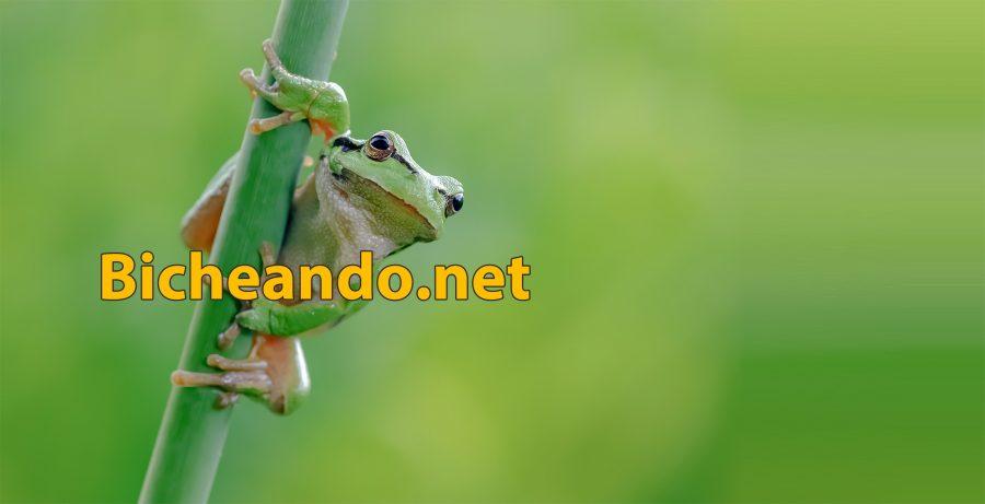 bicheando herpetologia para todos logo portada web 2019