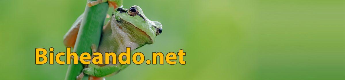 Bicheando.net Herpetología para todos